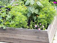 jetzt hochbeet richtig bepflanzen schritt f r schritt anleitung hier. Black Bedroom Furniture Sets. Home Design Ideas