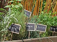 jetzt hochbeet richtig bepflanzen schritt f r schritt. Black Bedroom Furniture Sets. Home Design Ideas