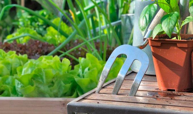 10 Goldene Hochbeet Tipps Fur Gelungenes Gartnern Biogreen De