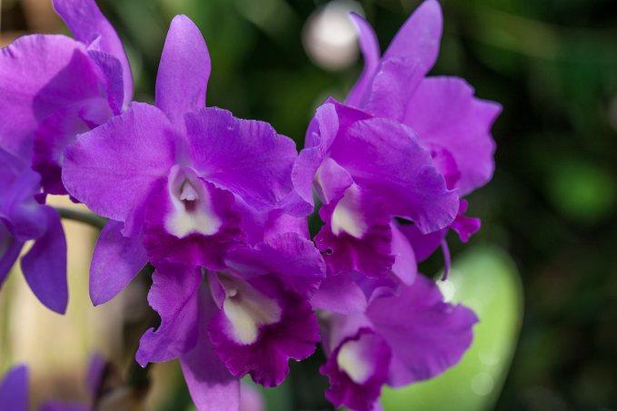 orchideen pflegen die besten tipps und tricks. Black Bedroom Furniture Sets. Home Design Ideas